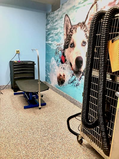 grooming station at Canine Fitness and Fun
