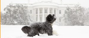 dog and snowy whitehouse